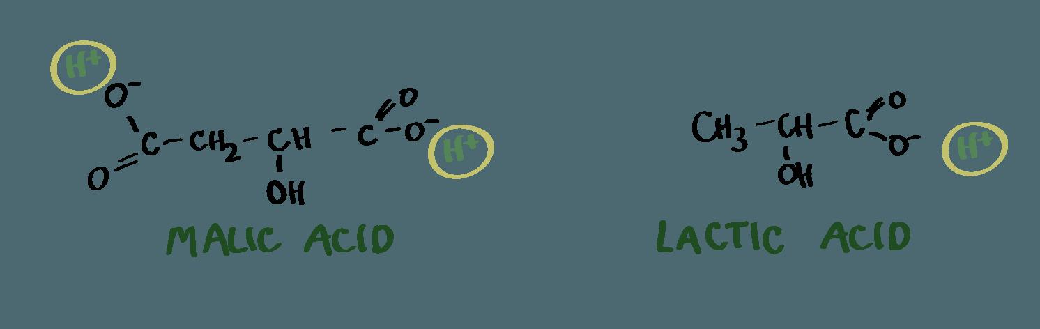 malic-acid-lactic-acid-02.png